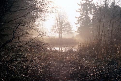 Robson's Pond
