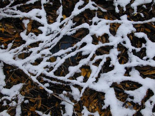 Snowy Mulch