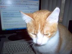 Tigger (azmarine) Tags: animals 2006 kitties tigger