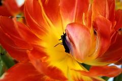 Flower at Brunch