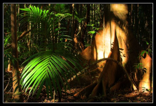 At the Feet of the Rainforest