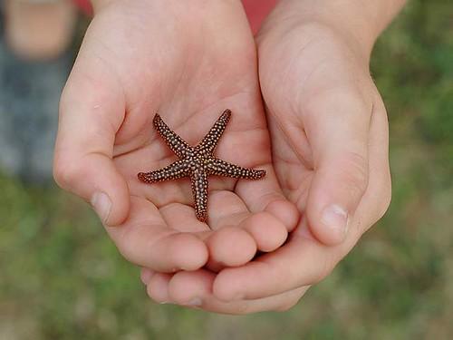 McCamping star fish.