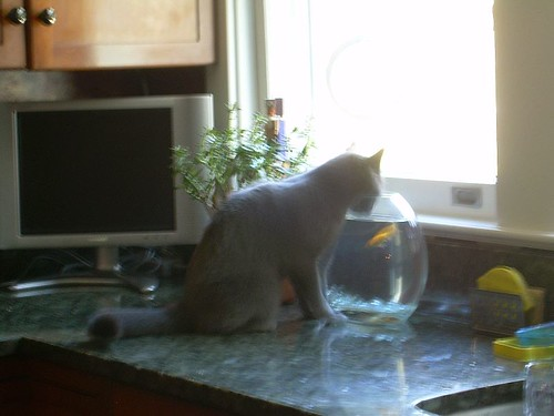 thirsty kitty