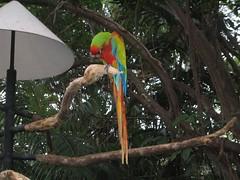 zoo aves 03