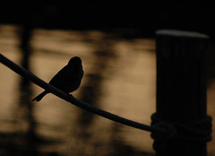 deep breath (empirik) Tags: bird japan tokyo nikon breath deep sparrow nikkor vr 55200 d40 empirik