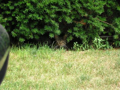 Tiggler, a feral kitten in Long Beach.