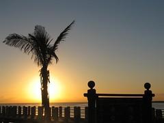 Palm sun (fiveIron) Tags: herman april gert cobus