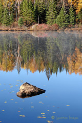 Algonquin Reflections (Jeff L.2007 (Laverton Images)) Tags: thanksgiving blue autumn trees ontario canada fall nature water reflections landscape fallcolors autumncolours autumncolors algonquin lilypads naturalworld algonquinpark canadiana fallcolours sonydsch1 yourstodiscover naturesgallery mywinners keepexploring ontariotourism wowiekazowie jeffl2007