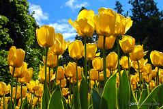 'tis a beautiful world indeed... (Joits) Tags: travel flowers vacation canada nature vancouver bravo tulips britishcolumbia prospectpoint beautifulday naturesfinest prospectpointlookout 2pair superaplus aplusphoto