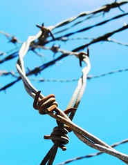 it's a jungle out there (Darwin Bell) Tags: blue wire barbedwire barbed winners supershot outstandingshots abigfave p1f1 30faves30comments300views anawesomeshot citrit