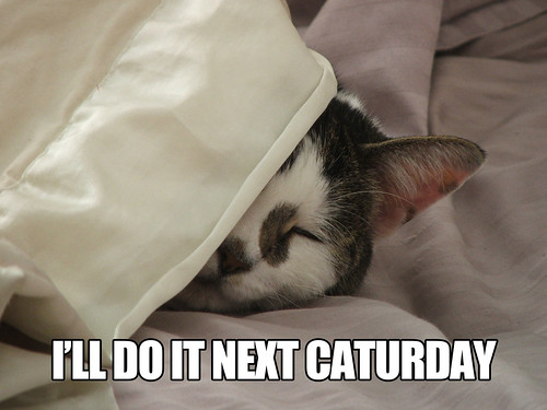 next caturday