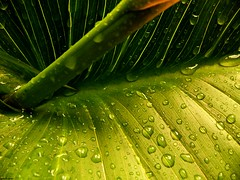 GrEeN (declicjardin) Tags: nature water eau palme vegetal arome outstandingshots macroliquid mywinner abigfave colorphotoaward  superbmasterpiece