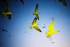 yellow gulls (lomokev) Tags: sky seagulls yellow fly lomo lca lomography seagull flash flight lomolca colorsplashflash morocco agfa ultra colorsplash essaouira coloursplash lomograph brids agfaultra brid coloursplashflash rota:type=showall rota:type=accessories rota:type=lightingexsposure rota:type=movement file:name=070510lomolcaf56 roll:name=070510lomolcaf published:title=hotshots hotshotspagenumber111