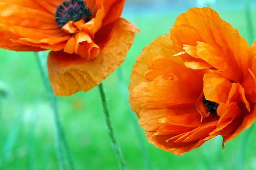 petals and wind