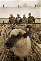 """Ewe Looking At Me"" II (jasontheaker) Tags: sepia sheep farmers yorkshire farming wharfedale jasontheaker otleyshow"