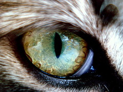 another world (BlAnChOn_FaBiAnA) Tags: macro eye cat eyes soe cateye cc300 mypool colorphotoaward magicofaworldinmacro