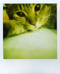 make a pair (Jersey Yen) Tags: boy cute cat polaroid big closed sweet handsome mimi strong sx70sonar withoutndfilter lookedatme