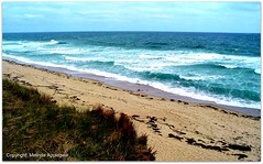 The Beach at Cape Cod National Seashore, Eastham, Massachusetts (Scandblue) Tags: ocean sea usa seaweed beach nature water america relax seaside sand surf waves capecod massachusetts horizon shoreline calm coastline seashore nationalseashore beautlful