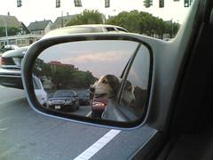 Back Seat Basset
