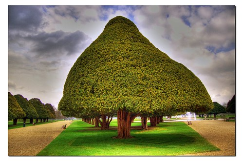 350 year old Yew tree | Flickr - Photo Sharing!