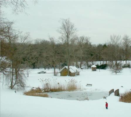 Winter Ringwood