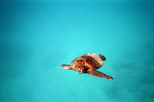 Snorkelling with Sea Turtle
