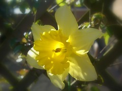 Spring Flowers (sykes17) Tags: light flower macro nature leaves yellow spring heads