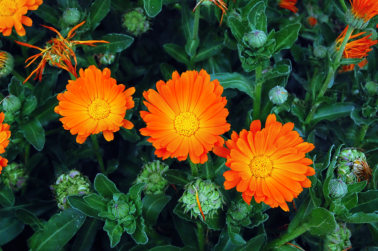 BeautyFul Flowers orange flowers nice flowers
