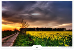 Crop Road (Gert van Duinen) Tags: trees summer landscape countryside topf50 bravo threatening menacing quality digitalart f45 crop 600v flowering v600 agriculture landschaft 600views 700views canola landschap blooming koolzaad landscapephotography blueribbonwinner topf40 topf45 topv600 45f topf700 coloredsky ominousclouds 50faves 2550faves dutchartist specland outstandingshotshighlight anawesomeshot impressedbeauty superaplus aplusphoto landschaftsaufnahme superbmasterpiece goldenphotographer diamondclassphotographer flickrdiamond roadstothehorizon 4550faves cresk world100f gertvanduinen