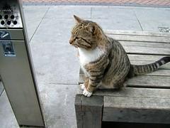 Cat in East Point (kleges) Tags: ireland dublin meer eastpoint businesspark