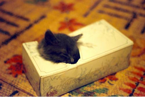 baby wylie in tissue box 2