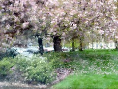 Pink Trees in the Rain (Impressionistic Look, but NOT a Painting) (Pixel Packing Mama) Tags: pink beautiful pinkngreen oregon wow wonder amazing fantastic niceshot gorgeous bestviewedlarge 123 321 fourseasons excellent impressionism genius artsyset flickrwow incredible snapgame impressionistic 4seasons aesthetics welldone exclamationpoints photographlikepainting tacomaartmuseum likeapainting willamettevalleyoregon blueribbonwinner v1000 pixelpackingmama 999v9f dorothydelinaporter favorites10 worldsfavorite wowphotos fogandrain beautifuluniverse treesinthedaylightset canonpowershota540 wonderfulunlimited canona540 abigfave dreamyphotographicimagery bonzag favoritedpixset impressedbeauty ultimateshot everythingpink wowaddonlypicturescommentedwithawowpool rainydayset wowiekazowiepool fourseasonsspringtime whereincorvallisisit springtimeitshereatlast usaunitedstatesofamericapool pinkset commentedwithanicondirectorygroup exclamationpointspool pixwithexclamationpointsincommentsset everythingamericapool americaamericaaprilshowersthreadnowopen views17502000pool uploadedfirsthalfof2007set uploadedfirsthalf2007 exclamationpointsincommentsset commentedwithwowunlimitedpool 50plusphotographersaged50andbetterpool wowphotospool oversixmillionaggregateviews over430000photostreamviews