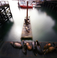 pinhole seals  at newport (manyfires) Tags: film oregon dock pacific pinhole newport pacificnorthwest seals zero2000 zeroimage myfavoritepartistheredboat pinholebb