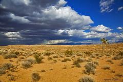 The American Desert - Mesquite Nevada (Michael Pancie