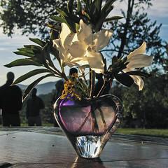 Lilies in Sunrise - Maqtutu - 2006