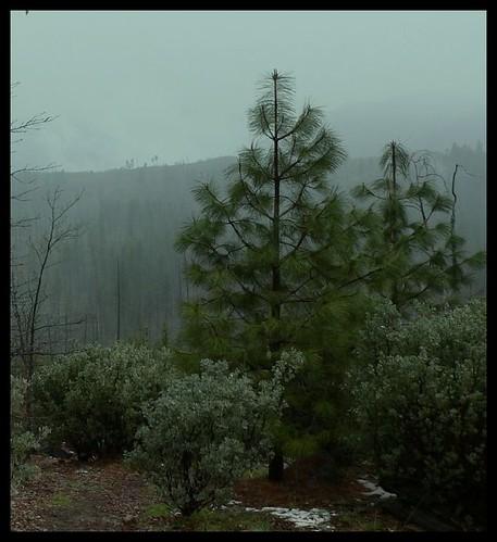 YosemiteNearEntrance