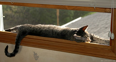 Pewee Soaks Up Some Sun (Jim Frazier) Tags: cats brown animal animals fauna cat relax weird illinois spring warm relaxing april batavia kane ourhouse 2007 bask pewee q2 toorganize tosets batblog jimfraziercom