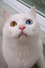 curious bubu