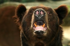BEAR WITH ME PLEASE