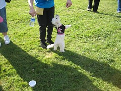 March of Dimes Dog