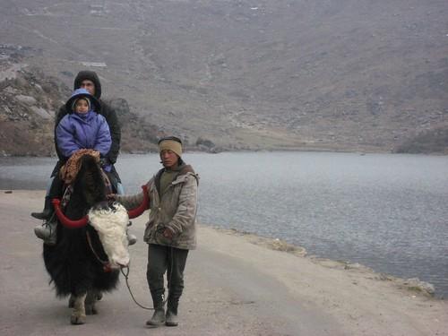 Yak ride at Tsomgo Lake