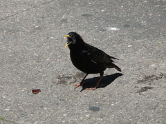 Bird with grape