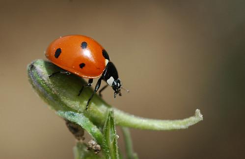 Ladybird's Travels