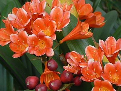 plante grasse a petites fleurs oranges