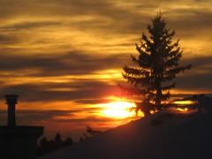 Sunrise (peggyhr) Tags: orange tree yellow sunrise gold edmonton rooflines