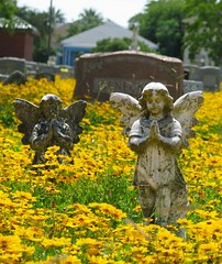 Angels () Tags: flowers galveston fleur cemetery grave yellow angel island spring texas rip houston galvestonisland