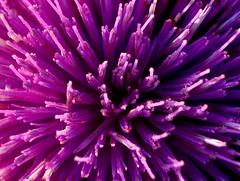 purple+incense