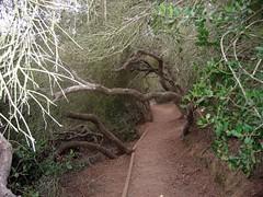 Path to cliffside (miss_cjm) Tags: san diego pines torrey