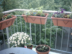 holiday on my balcony (Chicken of the baltic sea) Tags: flowers balcony hamburg spices kathyschfer veringstrae49
