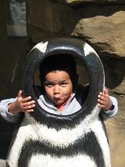 penguin wilbur